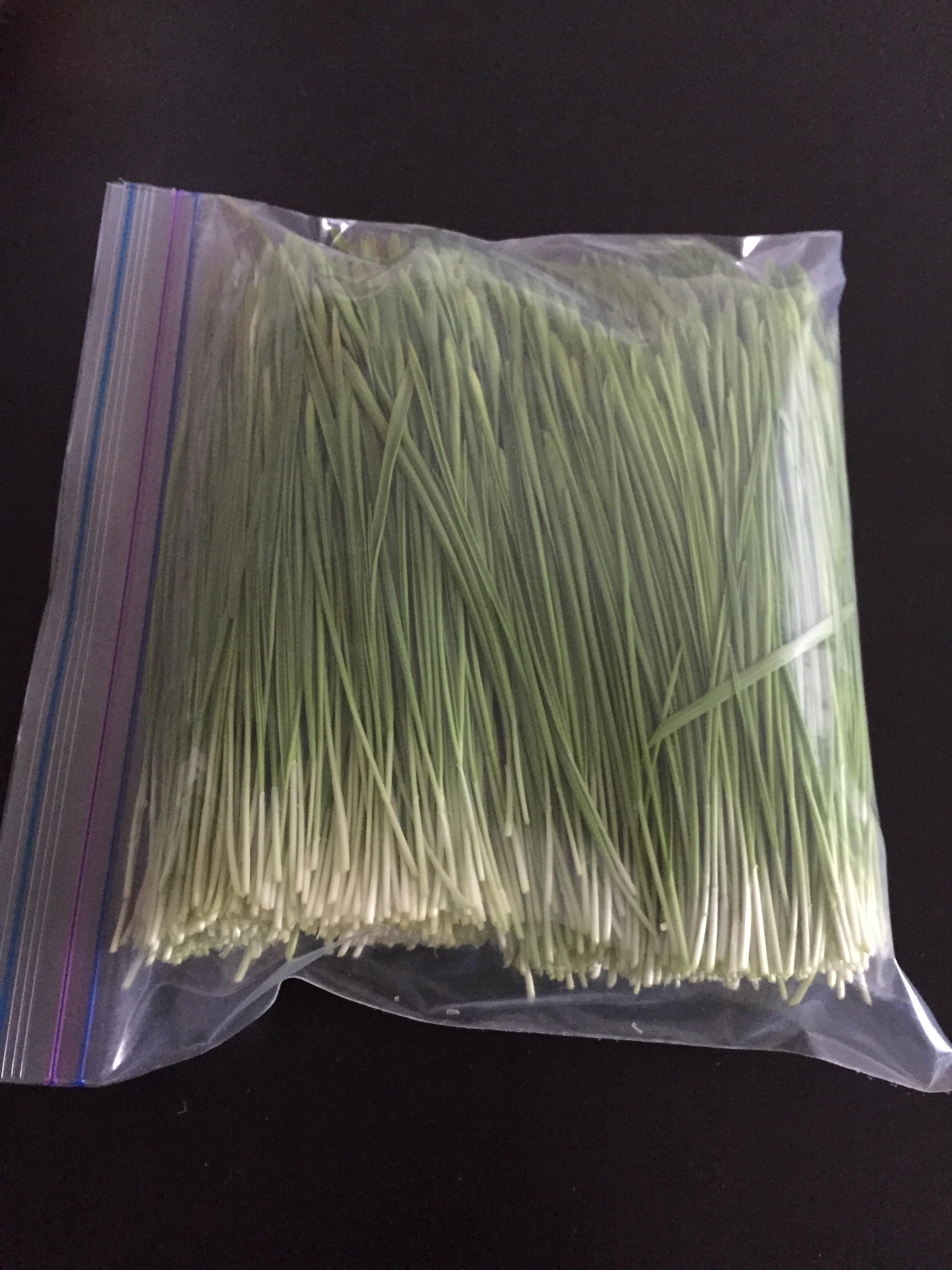 Comment faire pousser de l 39 herbe de bl - Faire pousser des endives ...