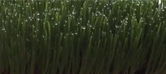 comment faire pousser de l herbe de bl 233